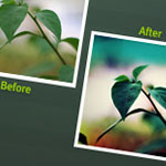 photoshop-actions-color
