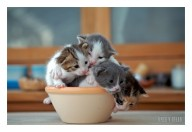 photograph of kitty bowl
