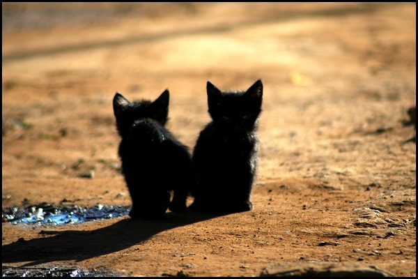 cute kitten photographs