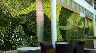 edmonton-airport-living-wall